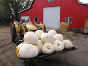 EZ Rock Bucket with Pumpkins